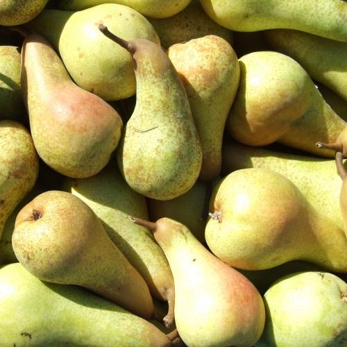 Pere pere abate cal 60 65 150 gr bio univeg trade for Kiwi giallo piante acquisto